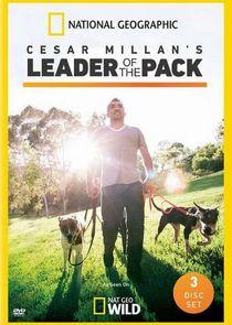Cesar Millans Leader of the Pack