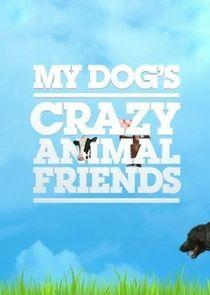 My Dogs Crazy Animal Friends