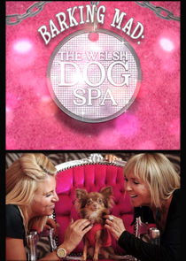 Barking Mad: The Welsh Dog Spa