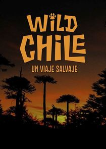 Wild Chile: A Wild Ride