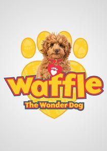 Waffle the Wonder Dog
