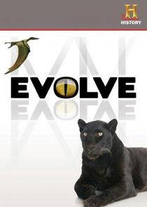 Wunder der Evolution - Der härteste Wettbewerb in der Natur