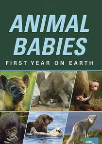 Animal Babies: First Year on Earth-41310