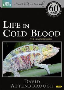Жизнь с холодной кровью