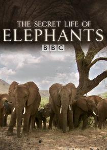 The Secret Life of Elephants-21457