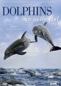 Дельфины: Шпион в стае