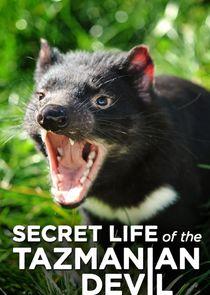 Secret Life of the Tasmanian Devil