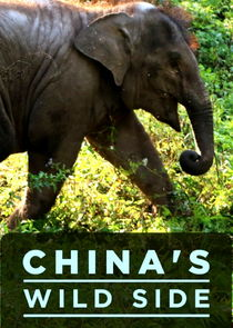 China's Wild Side