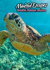 Mindful Escapes: Breathe, Release, Restore