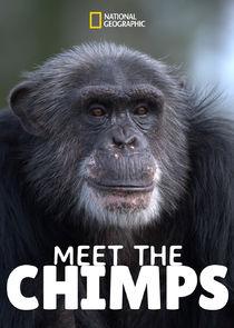 Meet the Chimps-44364