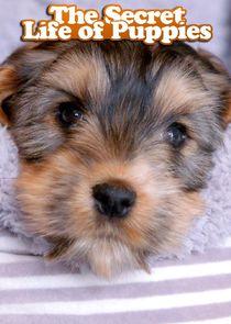 The Secret Life of Puppies-14751