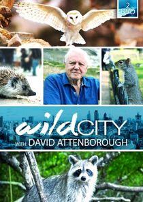 Wild City