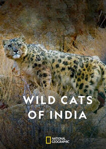 Wild Cats of India-51858