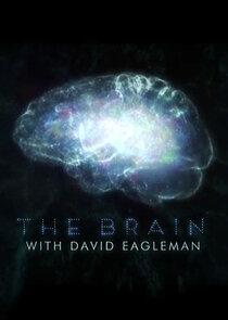 Мозг с Дэвидом Иглменом-4162