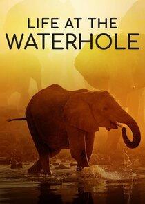 Life at the Waterhole-53626