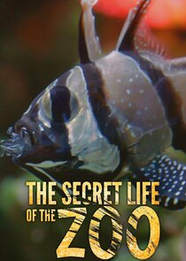 The Secret Life of the Zoo-11287