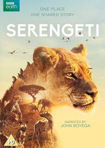 Serengeti-41039