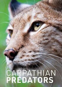 Carpathian Predators