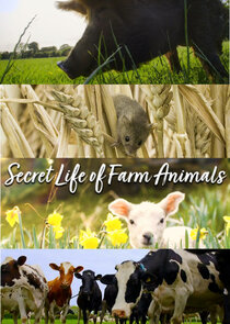 Secret Life of Farm Animals-36732