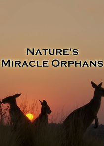 Natures Miracle Orphans