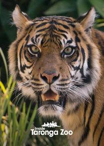 Inside Taronga Zoo-47503