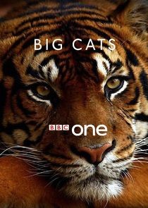 Big Cats-38436