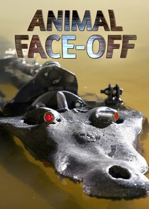 Animal Face-Off-55738