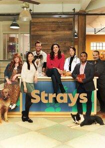 Strays-55143
