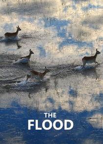 The Flood-36487