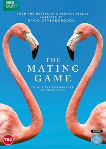 The Mating Game-56108